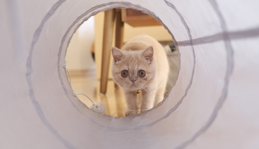 猫大喜びのコスパ最高のキャットトンネル!3COINSスリーコインズ