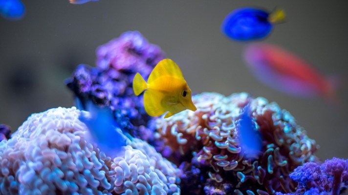 casino loses user data after hackers target fish tank iot thermometer