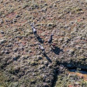"""MARSHLANDS"" | Vesteralen & Lofoten Islands | Foto: Marc Ihle | 2018"