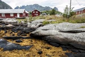 Traditional Settlements | Lofoten, Norway 2016 | Foto: Marc Ihle