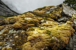 Arctic Alpine Vegetation | Lofoten, Norway 2016 | Foto: Marc Ihle