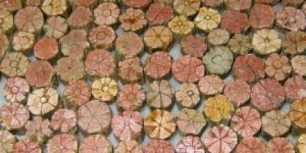 mirip-bunga-sakura-batu-ini-sangat-dilindungi-di-jepang