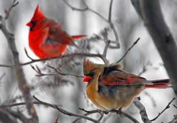 Photography-Birds
