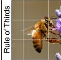 Rule-Of-Thirds-1
