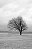 Alpha Tree (by richarddigitalphotos)
