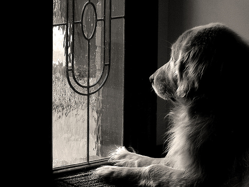 dog at the window pet photography tips