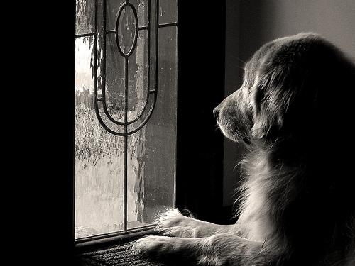 cachorro na janela dicas para fotografia de animais de estimação