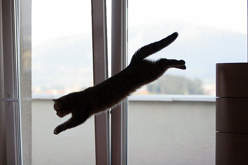 cat jumping off the furniture