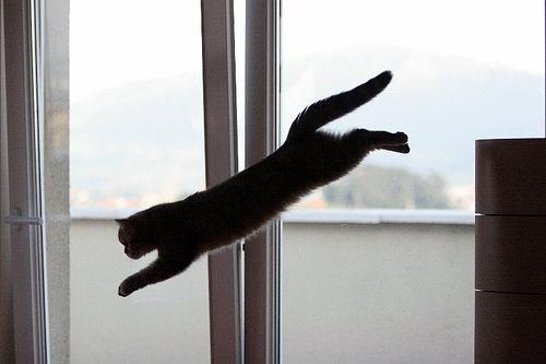 gato pulando da mobília