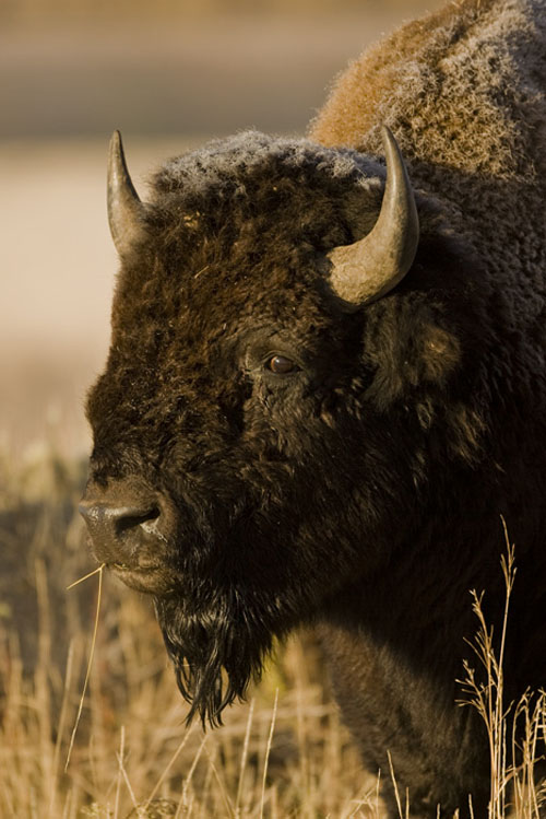 Wildlife Photography – Consider Your Subject First
