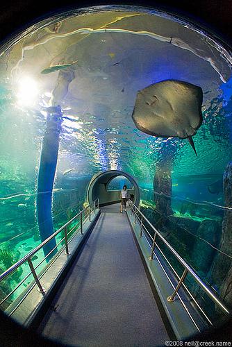 Melbourne Aquarium Tour