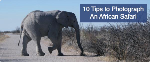 African-Safari-Photography