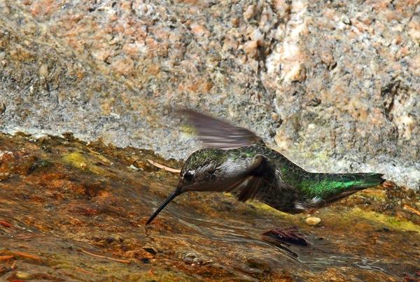 hummin-bird-photography.jpg