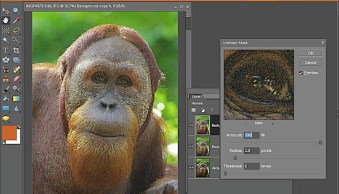 Spot Sharpening with a Faux Layer Mask in Photoshop Elements