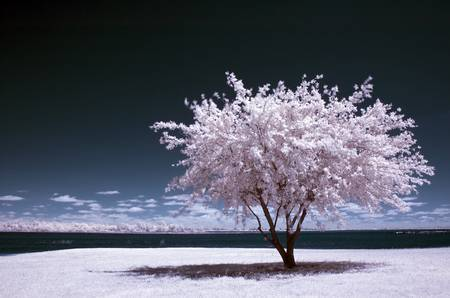 infrared - a winter summer by mike irwin