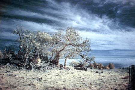Meyers Grade - False Color IR by Josh Sommers