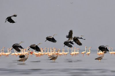 Photograph Copyright Mohammad al-Saleh
