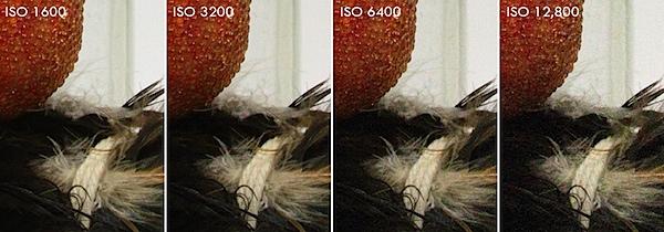 Canon EOS 7D ISO Samples.jpg