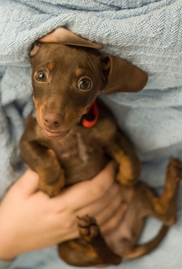 25 Inspirational Dog Portrait Photographs