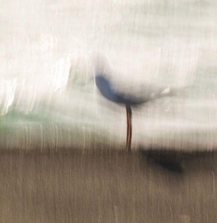 on edge by Eva Polak.jpg