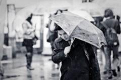 rain (by Draycat | www.draycat.com)