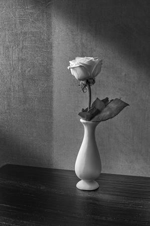 Flower on My Bedside Table by Ricardo Segovia