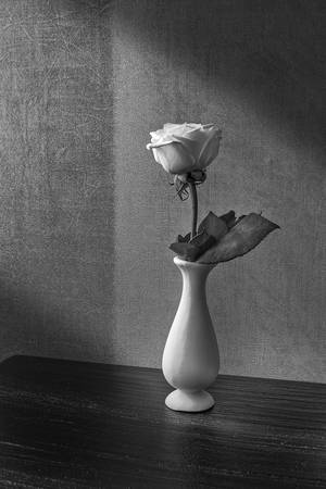 Flower on My Bedside Table by Ricardo Segovia