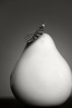Pear in Porcelain by Dawn LeBlanc
