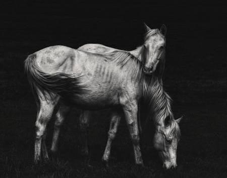 Wild Horses by Heather Rivet