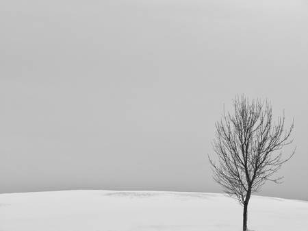 Lonely Tree on a Barren Hill by Keith Dotson