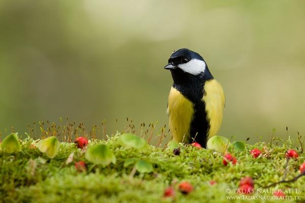 6-birdphotography.jpg