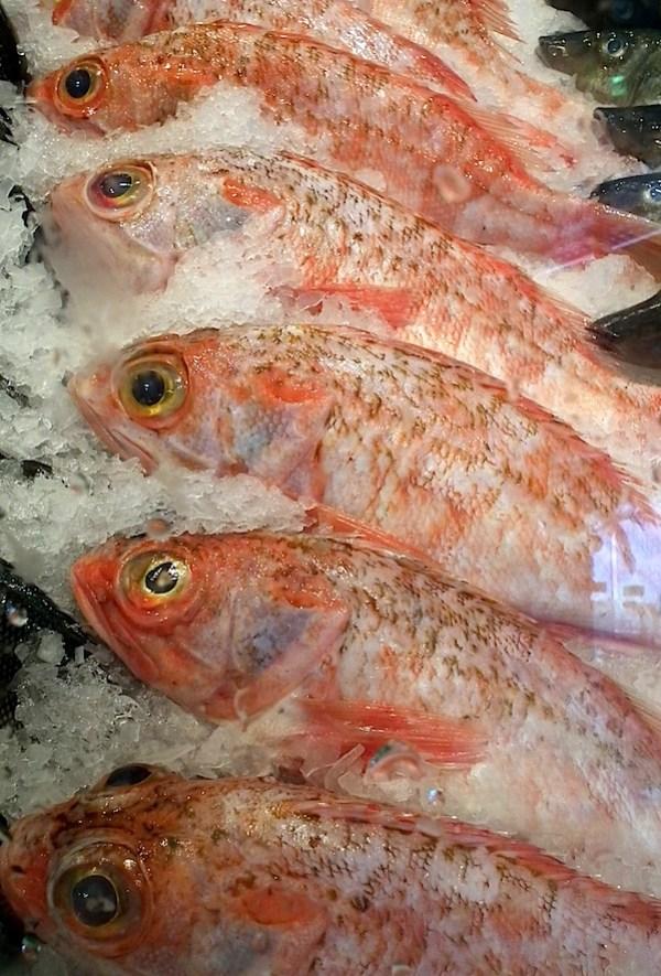 Fish 6.JPG