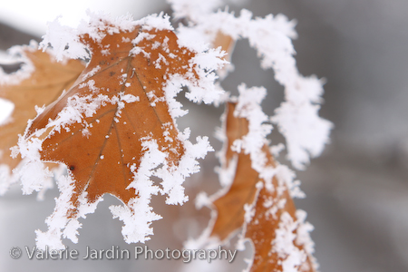 Image: Use a shallow depth of field to isolate a detail