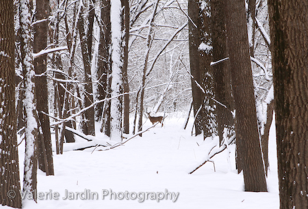 How to Stay Motivated to Photograph Nature after Months in the Snow and Cold