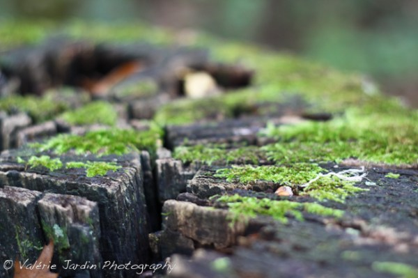 Image: Moss on tree stump