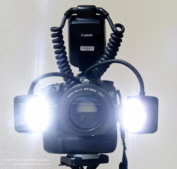& Macro Lighting Advantages Of The Canon Twin Lite MT-24EX azcodes.com