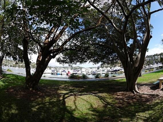 树和船8mm.JPG