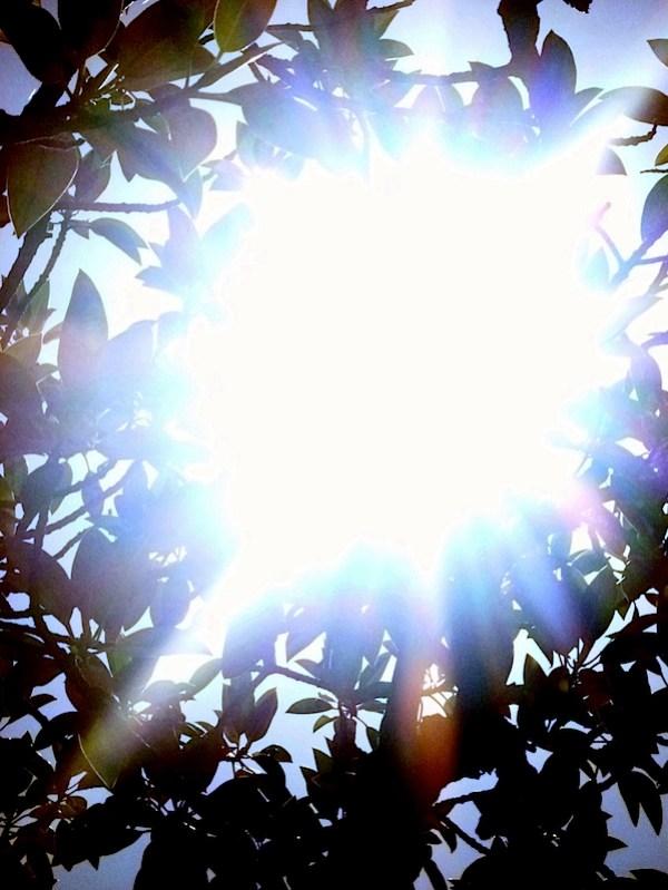 Tree sunflare 3 corrn.jpg