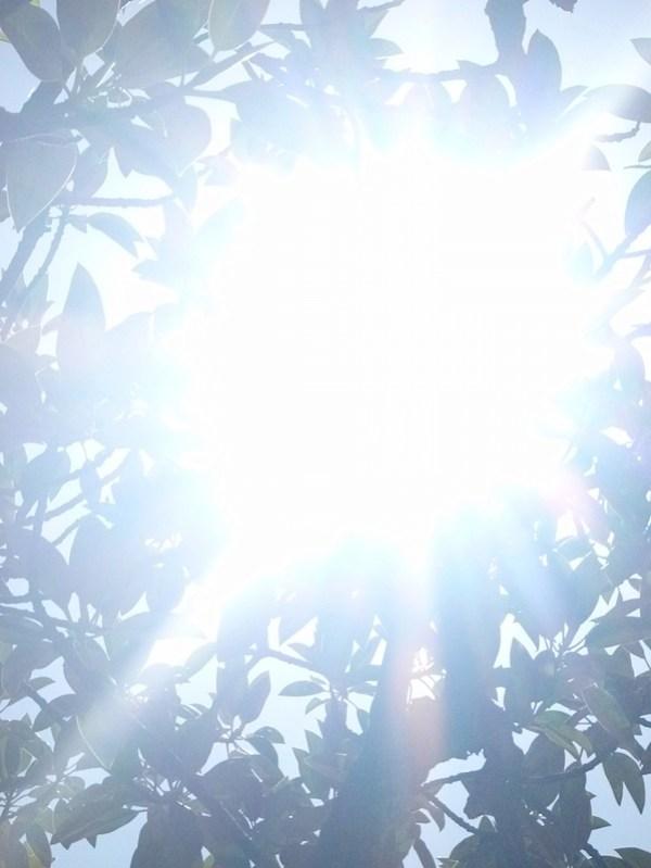 Tree sunflare 3 orig.JPG