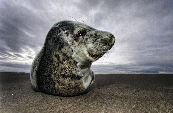 100 Ways Wildlife 2.jpg