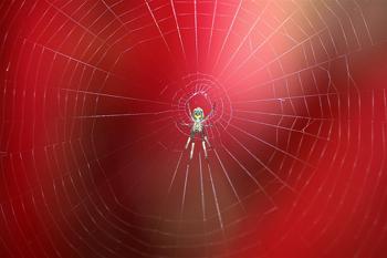 Spiders-Web-2
