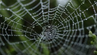 Spider Web Photography: 11 Tips for Magical Pictures