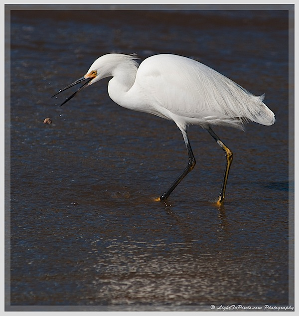 Plan and Time your Nature Photography Outing