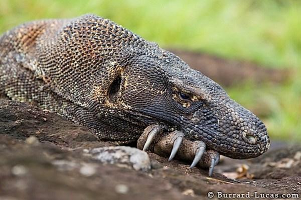 slumbering_dragon.jpg
