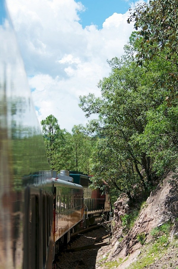 10 Train with Tree Up Track - Copper Canyon, Mexico - Copyright 2011 Ralph Velasco.jpg