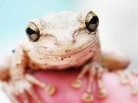 Image: Jocy's frog by Kaitlin Moreno