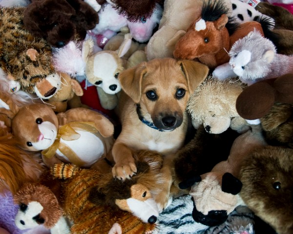 cute puppy in a pile of toys on dPS