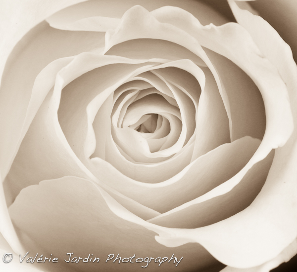 Image: Of course, I will always love photographing flowers with my macro lens but there is so much m...