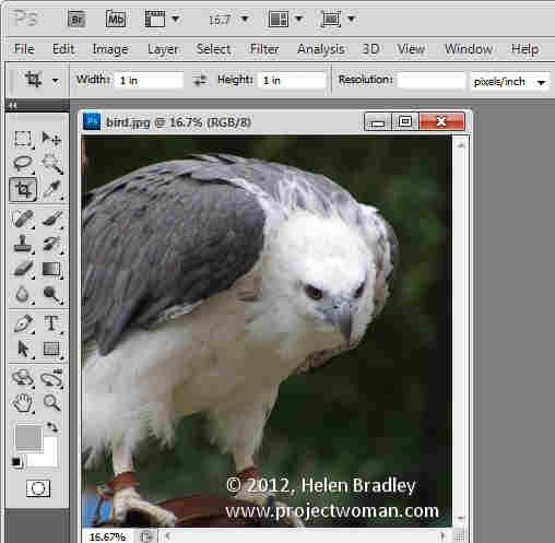 Photoshop_crop_image_to_fixed_ratio_3.jpg