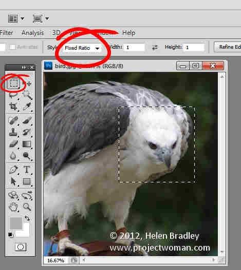 Photoshop_crop_image_to_fixed_ratio_7.jpg